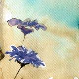 De bloemen van de lente in de weide Royalty-vrije Stock Foto