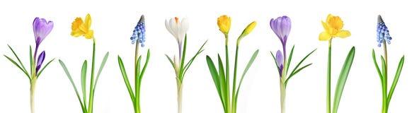 De bloemen van de lente in een rij royalty-vrije stock afbeeldingen