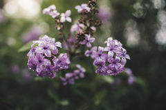 De bloemen van de lente in een tuin Stock Afbeeldingen