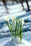 De bloemen van de lente in hout Stock Fotografie