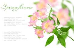 De bloemen van de lente op een wit Stock Afbeeldingen