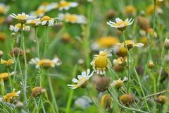 De bloemen van de lente op gebied Royalty-vrije Stock Afbeeldingen
