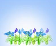 De bloemen van de lente van muscari Royalty-vrije Illustratie