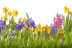 De bloemen van de lente Royalty-vrije Stock Foto