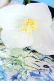 Jasmijn met water royalty-vrije stock afbeeldingen