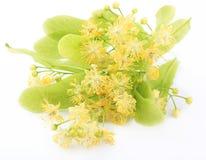 De bloemen van de linde Royalty-vrije Stock Afbeelding