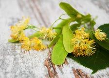 De bloemen van de linde Stock Foto's