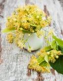 De bloemen van de linde Stock Fotografie