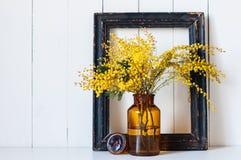 De bloemen van de mimosalente Stock Afbeeldingen