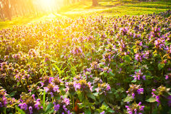 De bloemen van de ochtend Stock Afbeelding