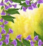 De bloemen van de ochtendglorie Royalty-vrije Stock Afbeeldingen