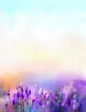 De bloemen van de olieverfschilderijlavendel in de weiden Royalty-vrije Stock Fotografie