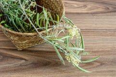 De bloemen van de olijf Royalty-vrije Stock Fotografie