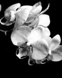 De bloemen van de orchidee royalty-vrije stock afbeelding
