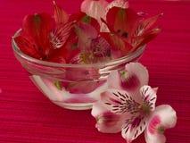 De bloemen van de orchidee Stock Foto's
