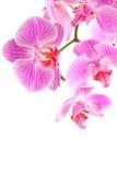 De bloemen van de orchidee op tak stock fotografie