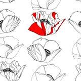 De bloemen van de papaver Royalty-vrije Stock Foto's