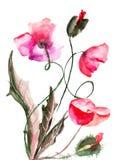De bloemen van de papaver, waterverfillustratie Stock Afbeeldingen