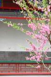 De bloemen van de perzik Royalty-vrije Stock Afbeeldingen