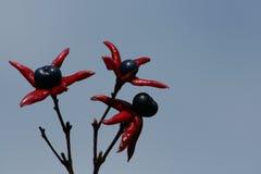 De bloemen van de pindakaasstruik Royalty-vrije Stock Fotografie