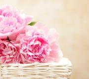 De bloemen van de pioen - achtergrond in Victoriaanse stijl Royalty-vrije Stock Fotografie