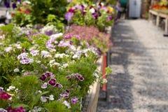 De bloemen van de serre Stock Afbeeldingen