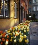 De bloemen van de stad. Stock Foto's