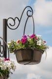 De bloemen van de stad Stock Afbeeldingen