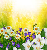 De bloemen van de tak gevoelige lente Royalty-vrije Stock Fotografie