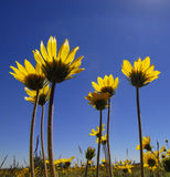 De Bloemen van de Tijd van de zomer Stock Foto's