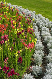 De bloemen van de tuin Royalty-vrije Stock Foto's