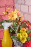 De bloemen van de tuin in potten Royalty-vrije Stock Foto
