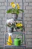 De bloemen van de tuin in potten Royalty-vrije Stock Afbeelding