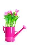 De bloemen van de tulp stock afbeelding