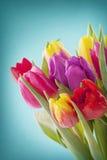 De bloemen van de tulp royalty-vrije stock afbeelding