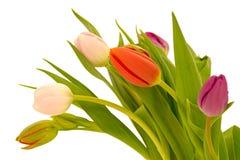 De bloemen van de tulp op witte achtergrond stock foto's