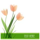 De bloemen van de tulp. Vector achtergrond Stock Afbeeldingen