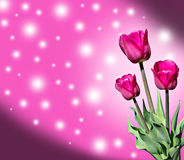 De bloemen van de tulpenlente Royalty-vrije Stock Foto
