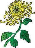 De bloemen van de Vectirchrysant Stock Fotografie