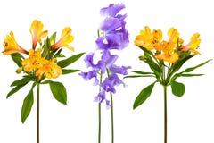 De bloemen van de versheid royalty-vrije stock afbeeldingen