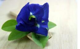 De bloemen van de vlindererwt Stock Foto