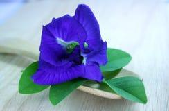 De bloemen van de vlindererwt Royalty-vrije Stock Afbeeldingen