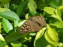 De Bloemen van de vlinderwegkant Royalty-vrije Stock Afbeeldingen