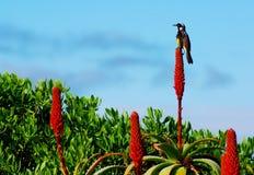 De Bloemen van de vogel & van de Cactus Stock Afbeeldingen