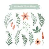 De bloemen van de waterverf Stock Fotografie