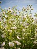 De bloemen van de weide royalty-vrije stock foto's