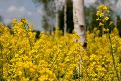 De bloemen van de weide Royalty-vrije Stock Foto