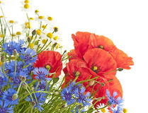 De bloemen van de weide stock foto's