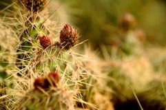 De Bloemen van de woestijn Stock Foto's