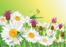 De bloemen van de zomer. Royalty-vrije Stock Fotografie